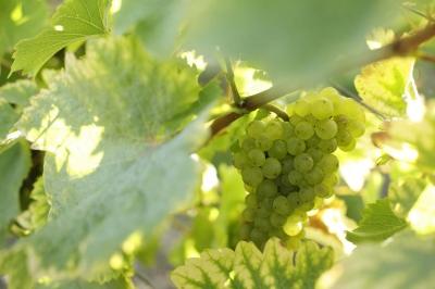 vin-de-loire-amboise