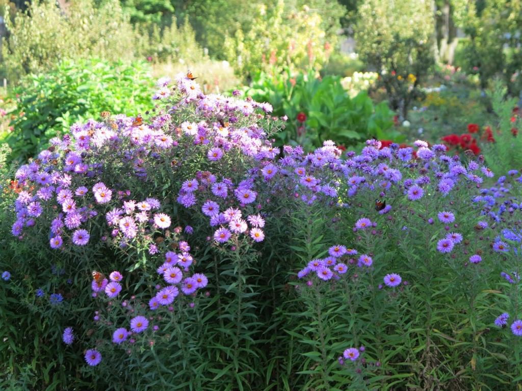 jardin-de-ronsard